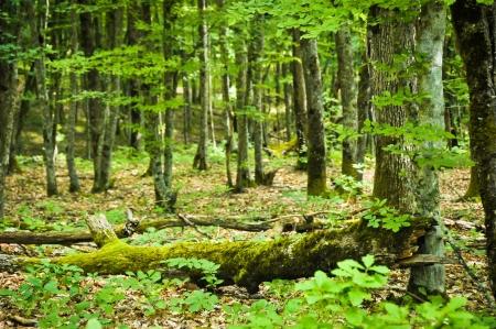 tree trunk with moss 版權商用圖片