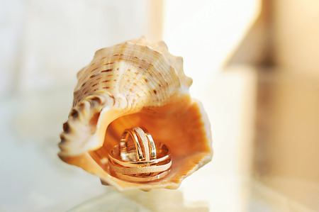 wedding rings in a shell photo