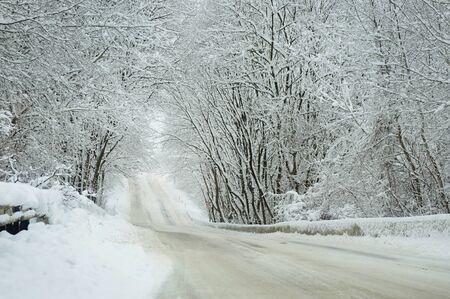 Frozen trees in field with. Winter landscape. photo