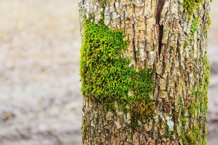veiny: Green moss on a tree trunk in wood