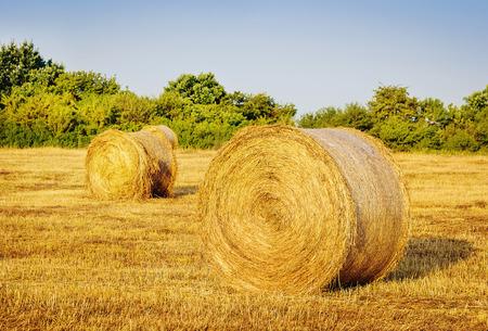 bail: Hay bail harvesting in golden field landscape