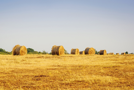 haystacks: Beautiful yellow field with haystacks at sunset Stock Photo