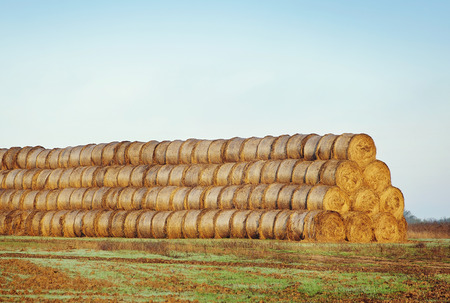 hayroll: agriculture, harvesting, farming, season and nature concept - haystacks or hay rolls on  field