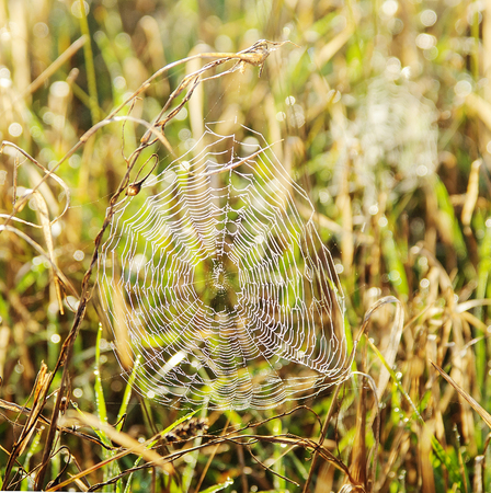 dragline: Spiders web in the forest In solar beams