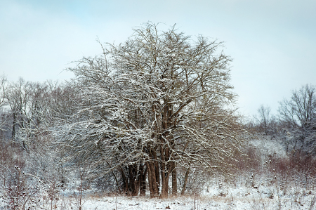 flurry: Frozen tree on winter field and blue sky Stock Photo