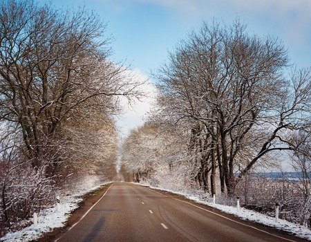 urban road: Winter trees on snow in hazy park with road