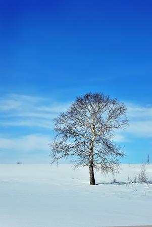 snowy field: Single tree on winter field and blue sky Stock Photo