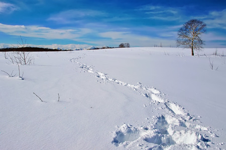 frontier: Footprints in deep snow and a tree on horizon. Winter landscape