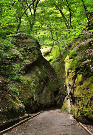 Path through rocks in summer wild forest