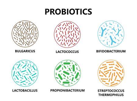 Probiotics. Microorganisms for human health. Good bacteria and bifidobacterium, lactobacillus. Vector