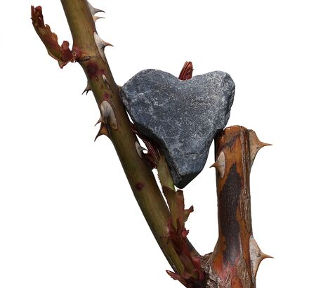 Rough figure of a heart made of gray pebble stone balancing on the stems of a rose with prickly thorns. Isolated on the white background
