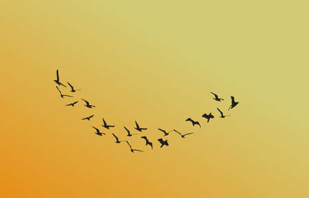 a flock of birds at dawn, the sun Illustration
