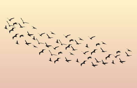 migrating birds: Flock of Geese flying in the dawn on the sky