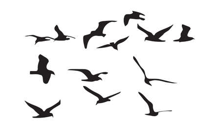 mew: Seagulls black silhouette on white background. Vector