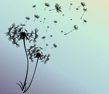 black seed: abstract card with dandelions vector background