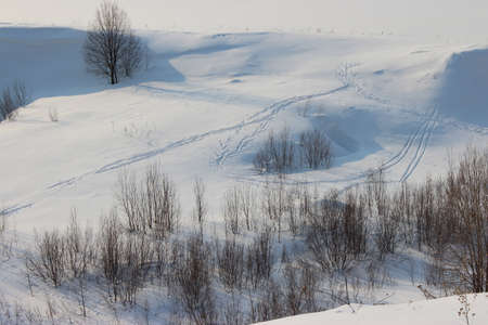 Snowy expanse with skis and small bushes