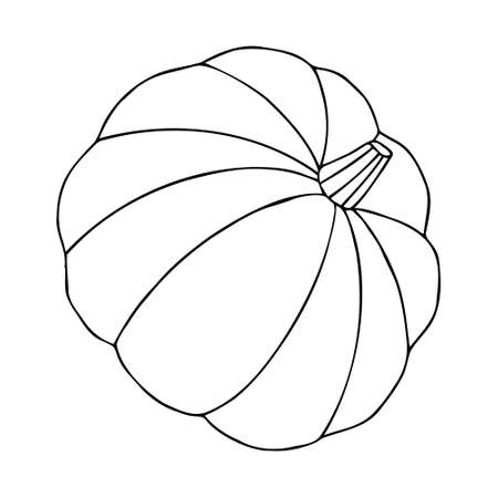 Vector pumpkin in doodle style. The pumpkin is drawn with one line. Big and small pumpkins for Thanksgiving, Harvest and Halloween. You can color the vegetable. Vektorgrafik