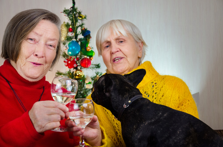 black, active French bulldog looking how grandmothers in new year midnight clinking glasses. both granny take glass with alcohol. friends, sisters together. champagne wine. dog, pet at christmas tree Фото со стока