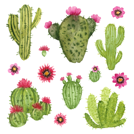 watercolor hand painted cactus. isolated elements Stock Photo