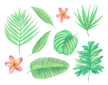 tropical exotic leaves and flowers. palm leaves, hibiscus and plumeria. hand drawing colored pencils illustration. isolated elements 版權商用圖片 - 103764951
