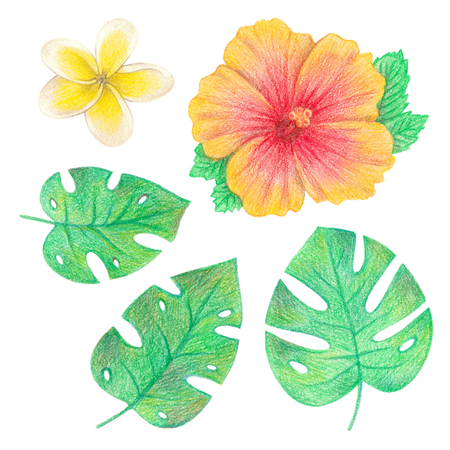 tropical exotic leaves and flowers. palm leaves, hibiscus and plumeria. hand drawing colored pencils illustration. isolated elements 스톡 콘텐츠