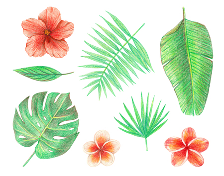 tropical exotic leaves and flowers. palm leaves, hibiscus and plumeria. hand drawing colored pencils illustration. isolated elements 版權商用圖片