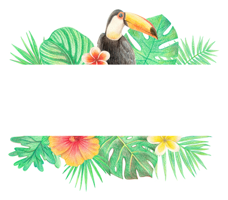 tropical exotic bird, leaves and flowers. toucan, palm leaves, hibiscus and plumeria. hand drawing colored pencils illustration. border frame. isolated elements