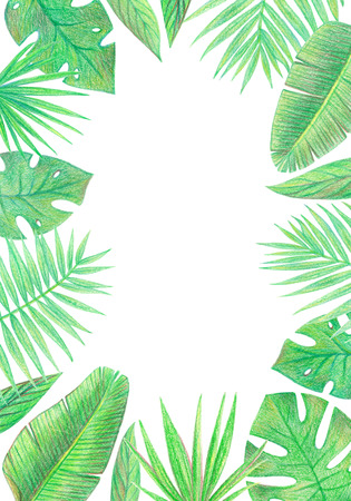 tropical exotic palm leaves frame. hand drawing colored pencils illustration. isolated elements 스톡 콘텐츠