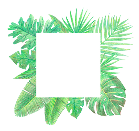 tropical exotic palm leaves frame. hand drawing colored pencils illustration. isolated elements 版權商用圖片