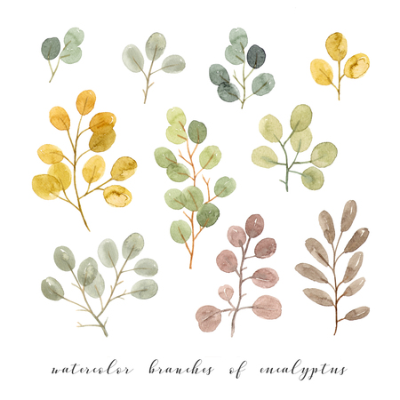 watercolor branches of eucalyptus. hand painting isolated elements 版權商用圖片 - 103732297