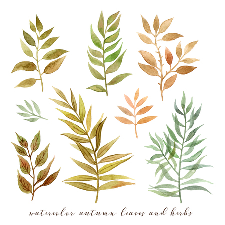 watercolor autumn leaves and herbs. hand painting isolated elements