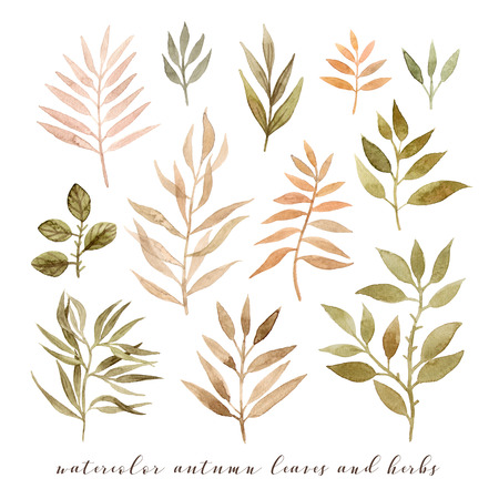 watercolor autumn leaves and herbs. hand painting isolated elements 版權商用圖片 - 103732356