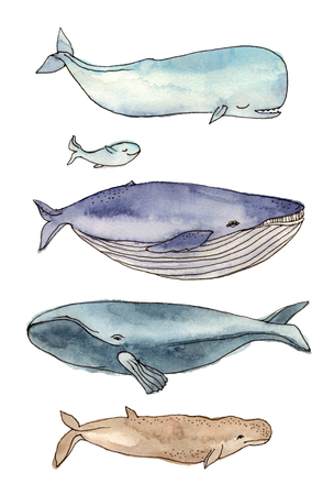 watercolor illustration whales family. hand drawing, isolated elements.