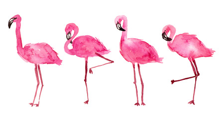 watercolor illustration pink flamingos. hand painted isolated elements.