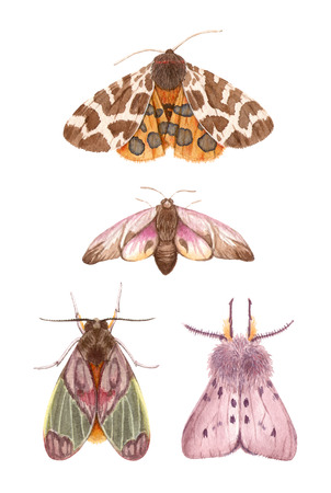 watercolor illustrations insects - moths. hand painting, isolated elements. 版權商用圖片 - 103945497