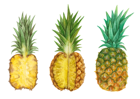 watercolor tropical fruit pineapple. hand painted isolated elements. 版權商用圖片 - 103945499