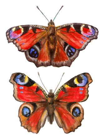 watercolor illustrations insects - peacock butterflies. hand drawing, isolated elements.
