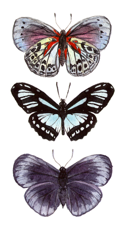 watercolor illustration insects butterflies. hand drawing, isolated elements.