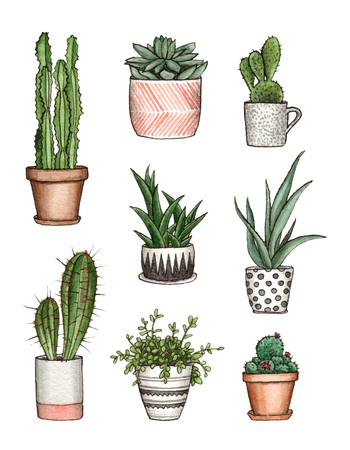 watercolor home plants. hand painting isolated elements.