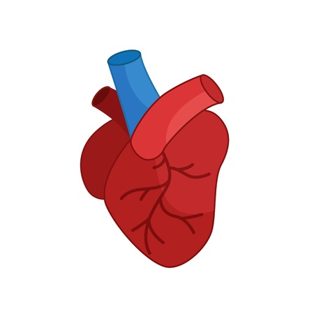 Heart icon in cartoon style on a white background.