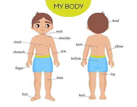 Materiały edukacyjne dla dzieci Moje ciało. Ilustracja chłopca kreskówki.