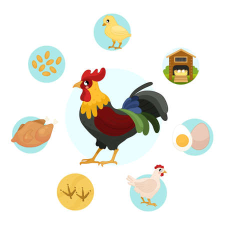 Vector illustration of farm animals. Cute cartoon cock. Set of icons. Benefits of farm animals