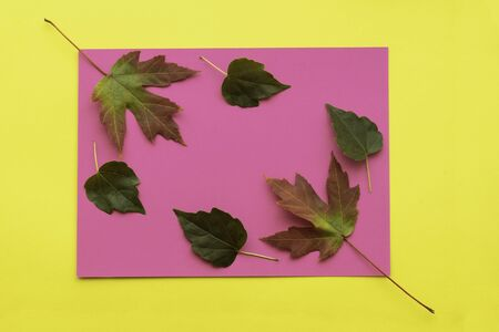 Autumn leaf flat lay composition. Green and red leaves on colorful paper background. Autumn concept. Fall leaves design. Top view, copy space Reklamní fotografie