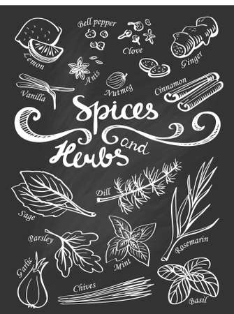allspice: Spice and herbs collection.Hand drawn sketch icons.
