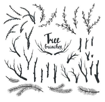 Dibujado a mano ramas de los árboles de la vendimia. set diseño vectorial decorativos rústicos.
