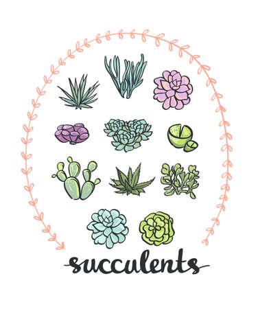 aloe vera plant: Succulent set. Vector cute Plants. Illustration