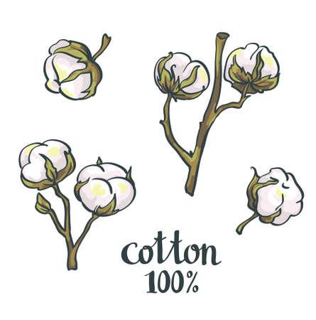 Coton naturel. Vector set.