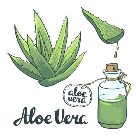 Natural Vector Aloe vera illustration isolated objects. Vettoriali