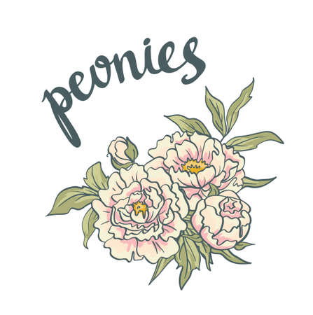 peonies: A Vector Floral Collection of hand drawn Pink Peonies