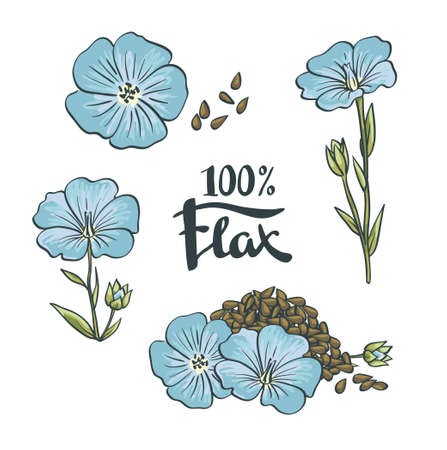 Flax Seeds and flowers. Vector Illustration